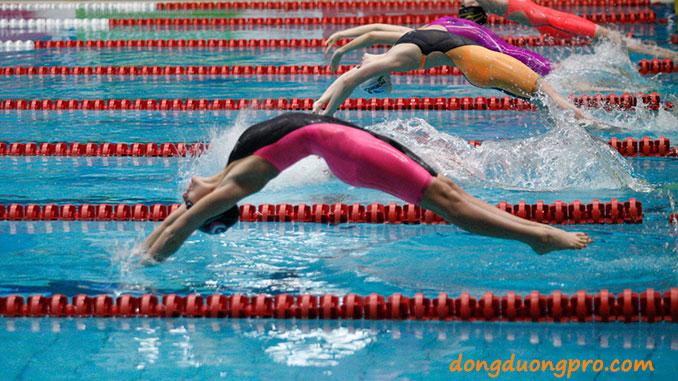 vạch đường bơi của bể thi đấu